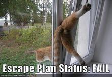 funny-pictures-escape-plan-fail.jpg