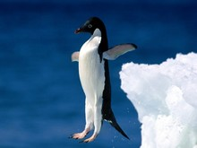 pinguins_9.jpg