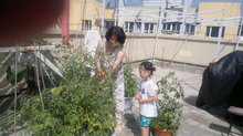 In the tomatoes 31072011060.jpg