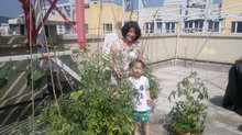 In the tomatoes 31072011061.jpg