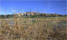 View of Pienza from the fields below