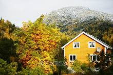 Gult hus i høst - Yellow house in autumn