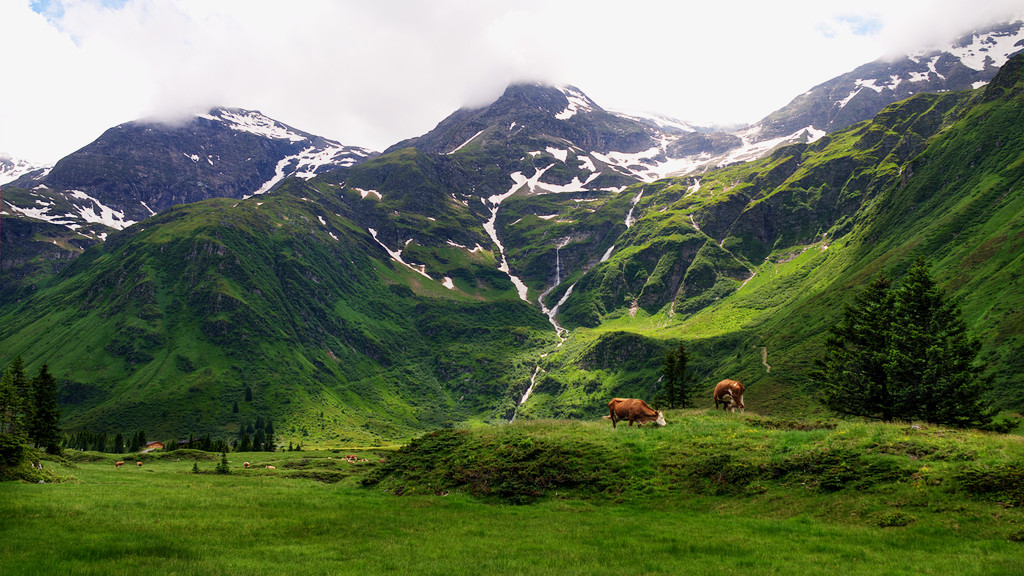 Green alpine meadows