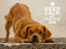 Waggo.com Keep Calm & Cuddle On 1024x768 Wallpaper