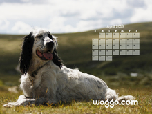 April 2013 Dog Calendar Desktop Wallpaper  Waggo.com 800x600