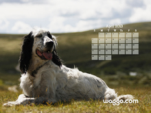 April 2013 Dog Calendar Desktop Wallpaper  Waggo.com 1024x768