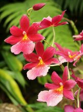 Ericka Schiffman Pink orchids Small File.jpg