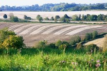 Ericka Schiffman Somerset Striped Farm Fields Small File.jpg