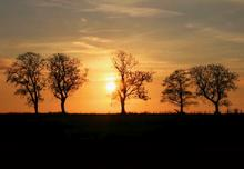 five-trees-cheshire-sunset-ericka-schiffman.jpg