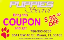 Dogs For Sale In Miami FL - Puppies Secret #2 (786) 703-6590