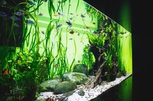 How Much Co2 Do Planted Aquariums Need?