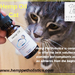 Hemp Oil Cat